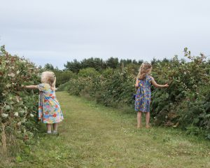 Two young girls with blonde hair in dress picking raspberries on a Summer's day