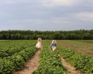 Summer Activities - Strawberry Picking In Northumberland. Image of two girls running in strawberry fields.