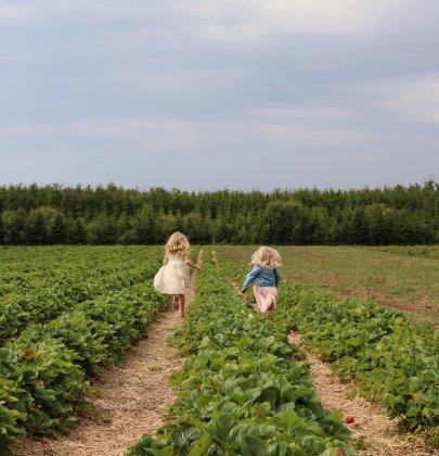 Summer Activities – Strawberry Picking In Northumberland