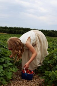 Summer Activities - Family strawberry picking - days out for the family. Image of girl picking fresh strawberries in a lush green field.