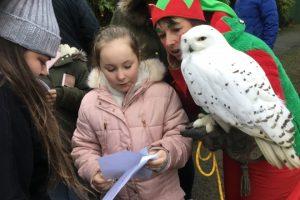 Northumberland Christmas experience days Falconry days