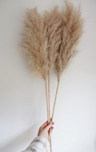 shop local xmas gifts dry flowers pampas grass